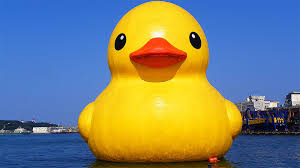 rubber ducks that sailed the world u0027s oceans