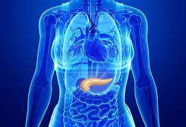 bauchspeicheldrüsenschwäche symptome bauchspeicheldrüse anatomie gesund at
