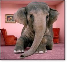 elephant living room elephants in the living room