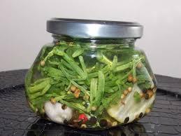 cuisiner la salicorne recettes de salicorne et vinaigre