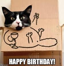 Cat Happy Birthday Meme - birthday cat in the box imgflip