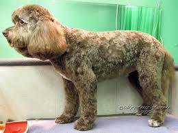 pet grooming good bad u0026 furry lamb