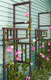 Trellis With Vines Best 25 Trellis Ideas On Pinterest Trellis Ideas Small