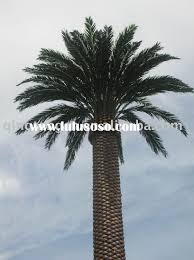 palm tree designs ideas pictures ideas