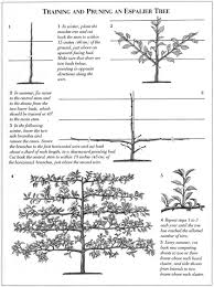 espalier king garden designs