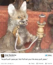 Taxidermy Fox Meme - the absolute best of crap taxidermy weknowmemes