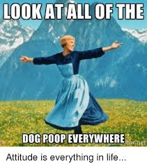 Dog Poop Meme - look atall of the dog poop everywhere net attitude is everything in