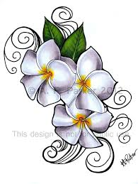 frangipani clipart tribal pencil and in color frangipani clipart