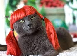 superb cat haircut meme looks rustic article harvardsol com