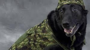 crochet pattern for dog coat crochet big dog sweaters patterns the crochet crowd