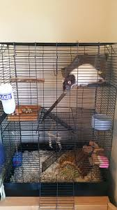 Cheap Rat Cage Basic Pet Rat Care U2014 Peace Of Mind In Home Pet Care Pet Sitting