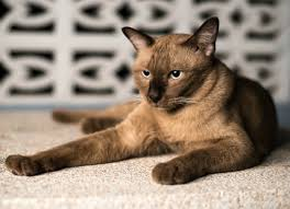 10 things you can u0027t forget when your cat u0027s got chronic renal