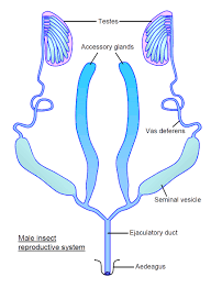 reproductive archives page 7 of 12 human anatomy charts