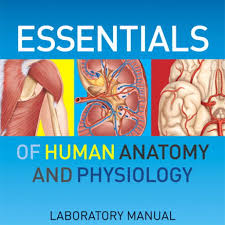 essentials of human anatomy and physiology human anatomy
