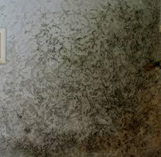 Schimmel Im Schlafzimmer Am Boden Giftige Schimmelpilze Sanierte Häuser Massenhaft Von Algen