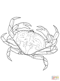 dungeness crab coloring page free printable coloring pages