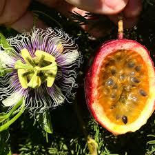 flower fruit how to grow fruit tastylandscapetastylandscape