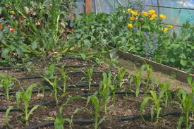 how to set up a rainwater irrigation system for your