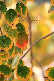 Photographers Colorado Springs Fall Colors Lauren Carlson Photography Colorado Springs