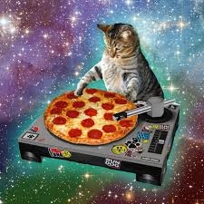 thanksgiving cat gif lupis famous pizza