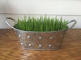 wheat grass centerpieces in 6 days hometalk