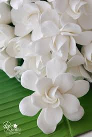 146 best forever gardenias images on pinterest gardenias white