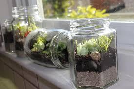 best glass terrarium containers u2013 outdoor decorations