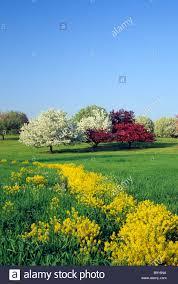 Mn Landscape Arboretum by Minnesota Landscape Arboretum In Chaska Minnesota Spring Stock