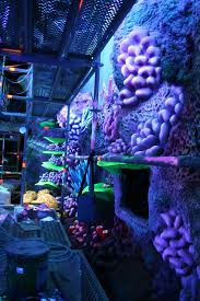 89 best emmett s nemo bedroom idea images on pinterest finding disney finding nemo france if you could do this to a play mickey moviecoolest bedroomsplay