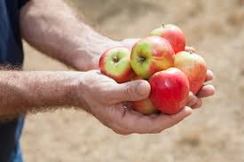can diabetics eat apples livestrong com