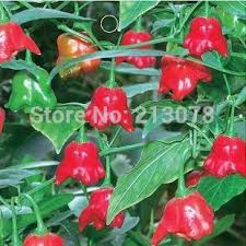 best vegetables fruits and seeds chili skgs wind chimes ornamental