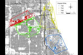 Boystown Chicago Map by City Coyotes Way More Mobile Than Suburban Ones And They Look