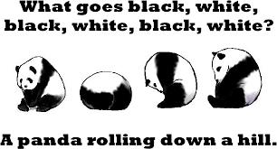 Memes De Pandas - panda i love pandas top memes jokes daily memes 3 on