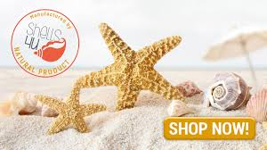 where to buy seashells buy sea shells and starfish seashells