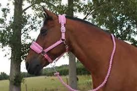 horse print fur padded headcollars halter matching lead pink