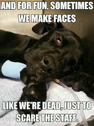 Vet Tech Memes - 11 best work images on pinterest funny stuff veterinarian