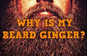 red pubic hair pictures my hair is not ginger so why is my facial hair the beard struggle