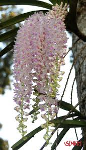 top 25 best indian flower names ideas on pinterest indian