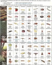 best 25 bug identification ideas on pinterest insect identifier