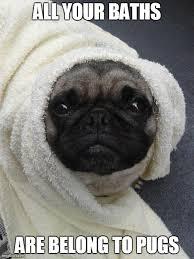 Birthday Pug Meme - birthday pug meme 28 images pugs pugs and more pugs happy