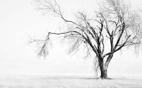 nature snow cool bw display tree colored winter