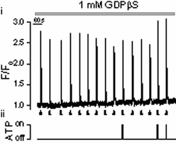 atp inhibits ins 1 4 5 p3 evoked ca2 release in smooth muscle via