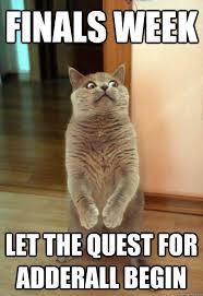 Meme Of The Week - finals week cat meme cat planet cat planet