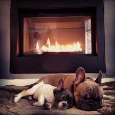 national dog day cute dogs in front of fireplaces old world