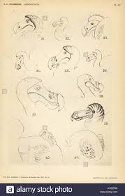 dodo studies stock photos u0026 dodo studies stock images alamy