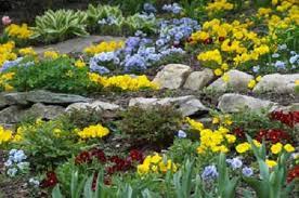 giardini rocciosi in ombra fiori per giardini rocciosi interesting fiori per giardini