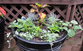 how to grow fruits vegetables and herbs in a container garden