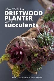 How To Make A Succulent Planter Diy Driftwood Planter Filled With Succulents Succulents And Sunshine