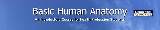 Anatomy And Physiology Introduction To The Human Body 01 Introduction And Terminology Basic Human Anatomy