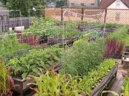 self sustaining garden builds self sustaining garden for ut jester dorm self sustaining